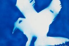 aquila effige(60x80cm)'10